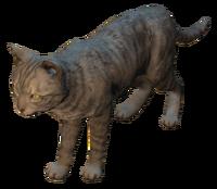 FO4 Cat