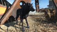 FO4FH Wolf1