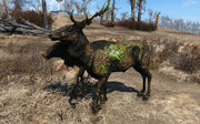 Fo4 glowing radstag