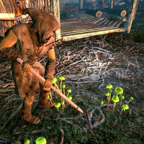 Клен на прополці грибів