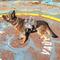 FO4 Легка броня для собаки1