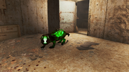 FO4 Glowing Mole rat