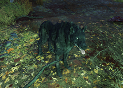 Fo76 Wolf