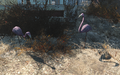 FO4 lawn flamingos.png