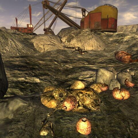 Кладка яєць кігтя смерті в Кар'єрі