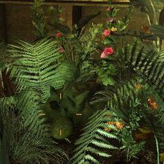 Спороноси ховаються у квітах <a class=