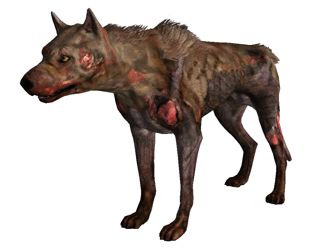 Pups in Fallout 3: where to look for the Guide to the game Fallout 3 76