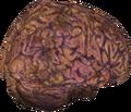 Ваш мозг