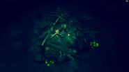 FO76 Deathclaw nest