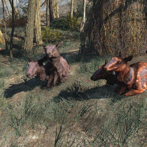 Самка Рад-оленя з однорічними дитинчатами