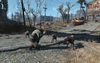 FO4 Attacked by mongrels