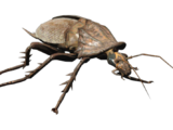Radroach (Fallout 4)