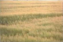 FoBoS 2 farm
