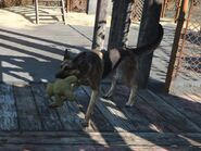 FO4 Dogmeat and Bear