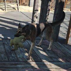 Собака грає з мишком