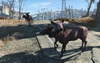 FO4 Two Radstag