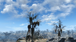FO4 car tree hill 2