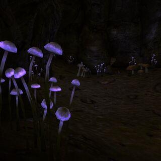 Фіолетові гриби в печері