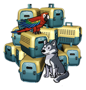 FoS Pet carrier x15