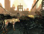 Psy na moście