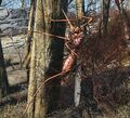 Fo4-bloodbug-tree.jpg