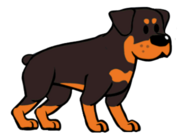 FOS Dog4