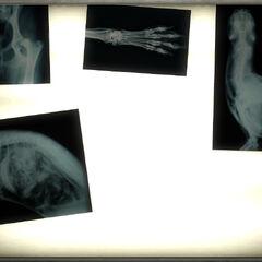 Рентгенівські знімки нічних мисливців у <a href=