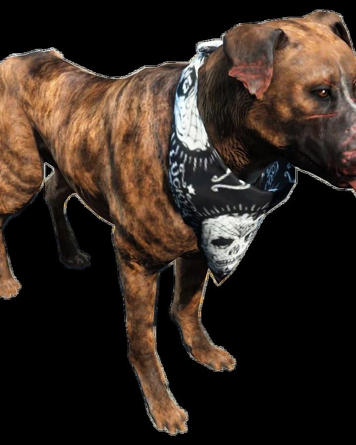 Dog Fallout 4 Fallout Wiki Fandom