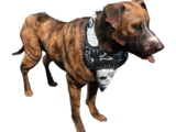 Dog (Fallout 4)