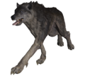 FO76 Grey Wolf