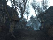 WWS violin trees