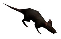 VB rat