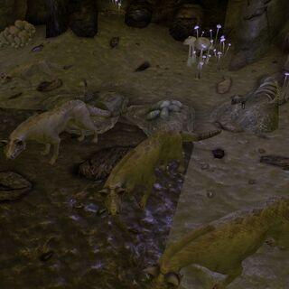 Спортивна сумка і кладка яєць нічних мисливців в західній печері