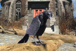 FO4 Raven