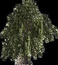 HoneyMesquite-plant