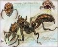 Giant ant CA2.jpg