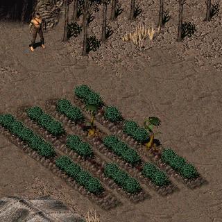 Хижі рослини на городі Хакунина