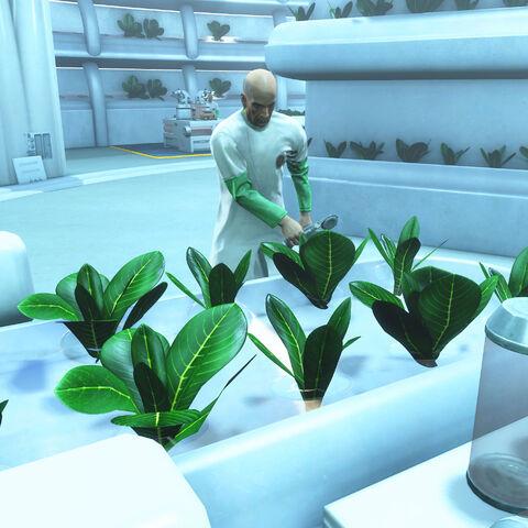 Айзек спостерігає за ростом рослин