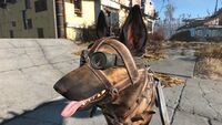 Fo4 Dogmeat welding goggles