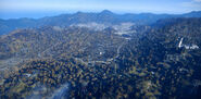 Forest-Fallout76