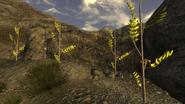 Flor de broquia planta 2