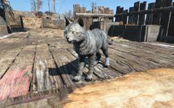 FO4 Maisie cat