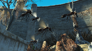 FO4NW Ant 5