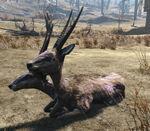 Gazelle2-NukaWorld