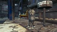 FO4FH Кошка с Азалии