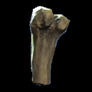 Broken tibia