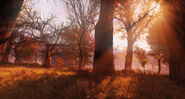 FO76 LS SunsetFog