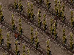 FO1 Hub farmer 1&2