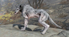 FO76WA The Beast of Beckley