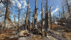 FO4FH Glowing Grove